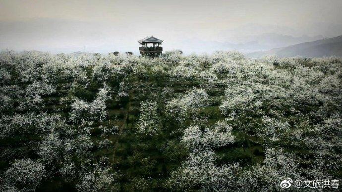 因梨结缘,就在梨花仙子降临的四月