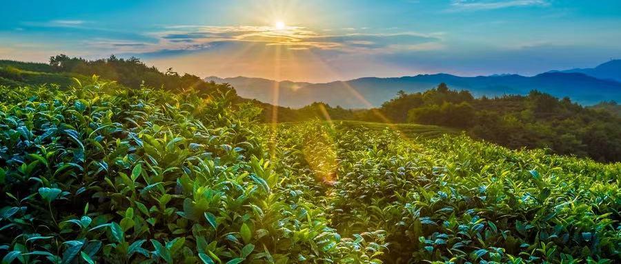 春天的太阳,是人体的万能补药